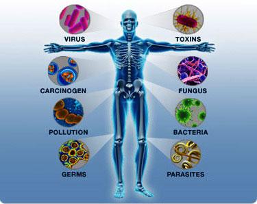 Como-fortalecer-el-sistema-inmunológico