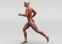 Como-se-hace--para-fortalecer-los-Músculos