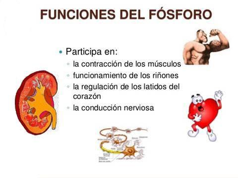 funciones-del-fosforo-en-nuestro-organismo