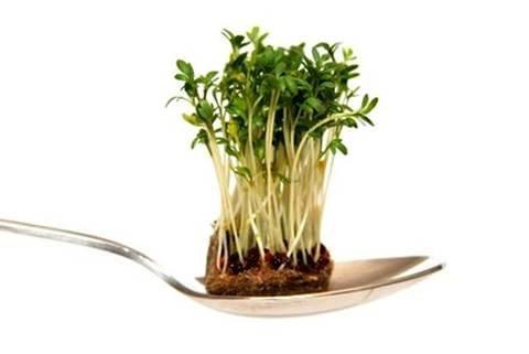 Alimentos germinados