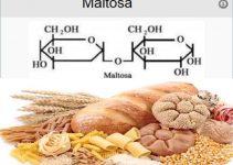 Beneficios de los alimentos ricos en maltosa Alimentos-para.com
