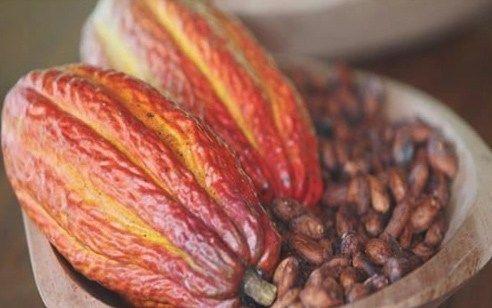 Chocolate y cacao alimentos bienestar
